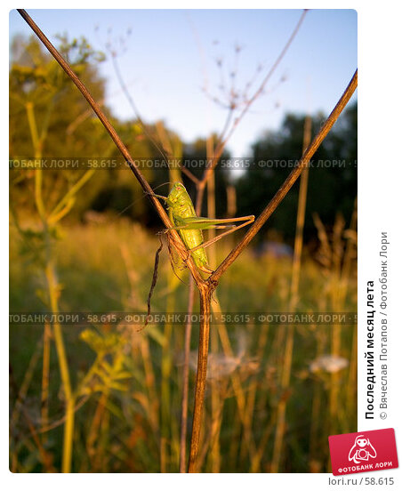 Последний месяц лета, фото № 58615, снято 18 августа 2006 г. (c) Вячеслав Потапов / Фотобанк Лори