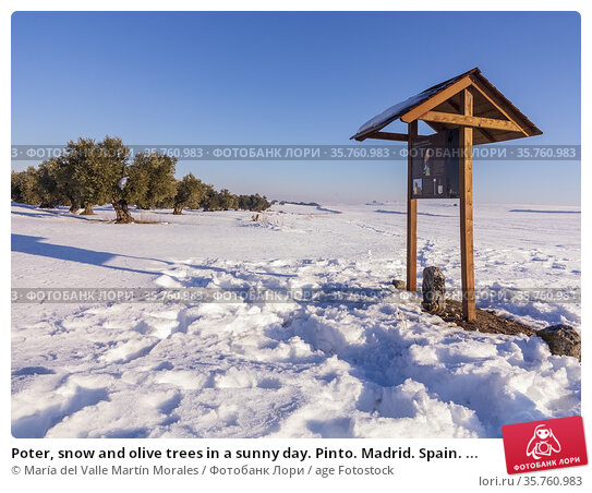 Poter, snow and olive trees in a sunny day. Pinto. Madrid. Spain. ... Стоковое фото, фотограф María del Valle Martín Morales / age Fotostock / Фотобанк Лори