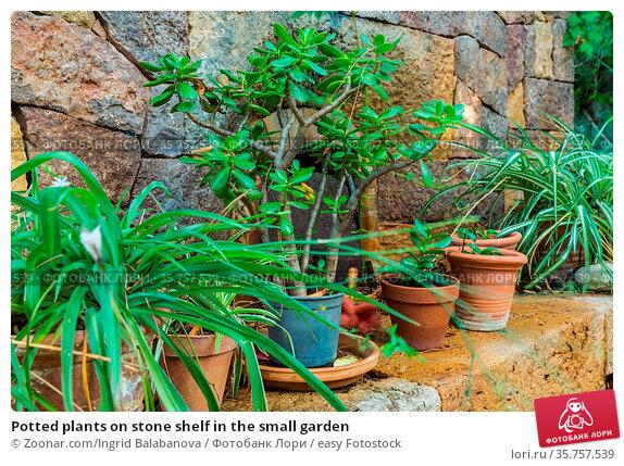 Potted plants on stone shelf in the small garden. Стоковое фото, фотограф Zoonar.com/Ingrid Balabanova / easy Fotostock / Фотобанк Лори