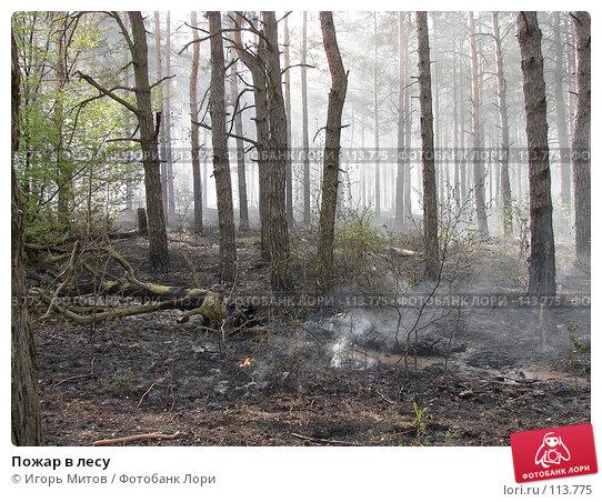 Пожар в лесу, фото № 113775, снято 6 мая 2007 г. (c) Игорь Митов / Фотобанк Лори
