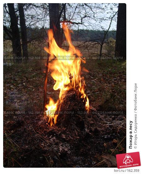 Пожар в лесу, фото № 162359, снято 26 сентября 2005 г. (c) Игорь Сидоренко / Фотобанк Лори