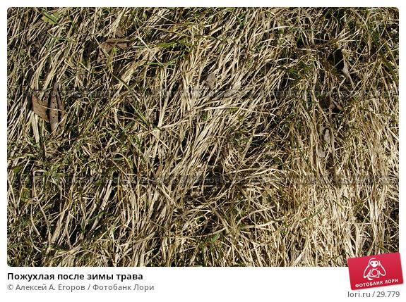 Пожухлая после зимы трава, фото № 29779, снято 20 февраля 2017 г. (c) Алексей А. Егоров / Фотобанк Лори