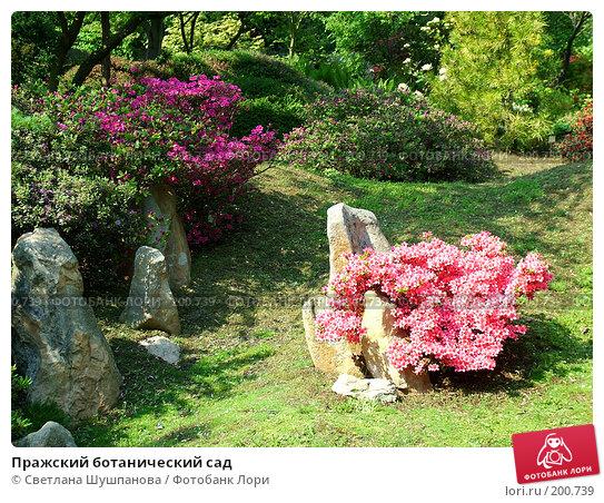 Пражский ботанический сад, фото № 200739, снято 9 мая 2006 г. (c) Светлана Шушпанова / Фотобанк Лори