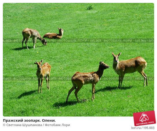 Пражский зоопарк. Олени., фото № 195003, снято 9 мая 2006 г. (c) Светлана Шушпанова / Фотобанк Лори