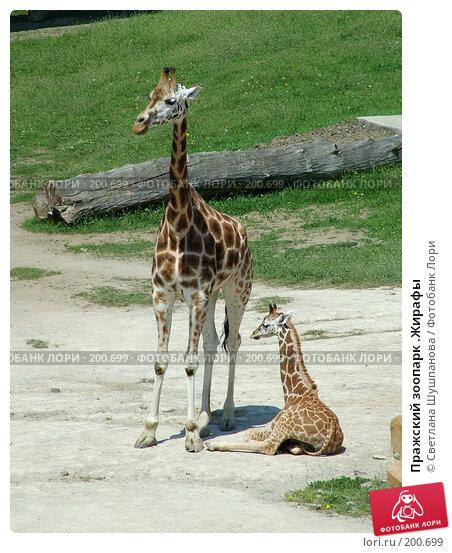 Пражский зоопарк .Жирафы, фото № 200699, снято 9 мая 2006 г. (c) Светлана Шушпанова / Фотобанк Лори