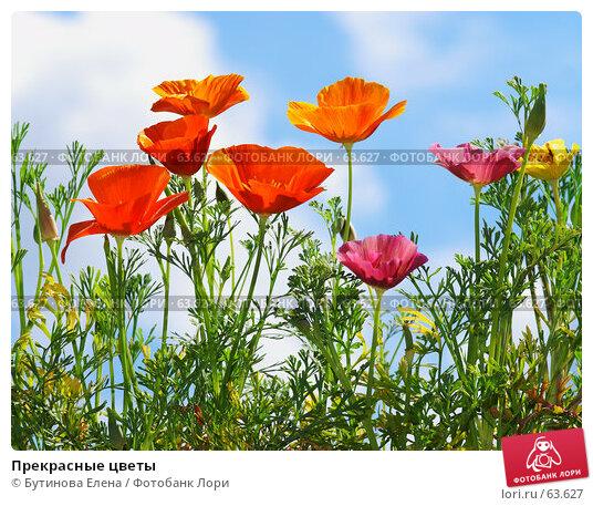 Прекрасные цветы, фото № 63627, снято 18 июля 2007 г. (c) Бутинова Елена / Фотобанк Лори