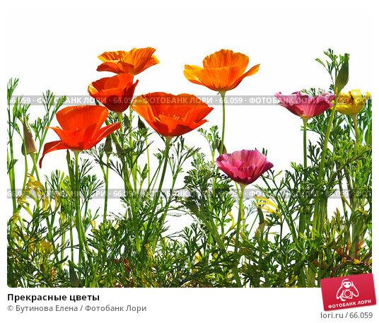 Прекрасные цветы, фото № 66059, снято 18 июля 2007 г. (c) Бутинова Елена / Фотобанк Лори