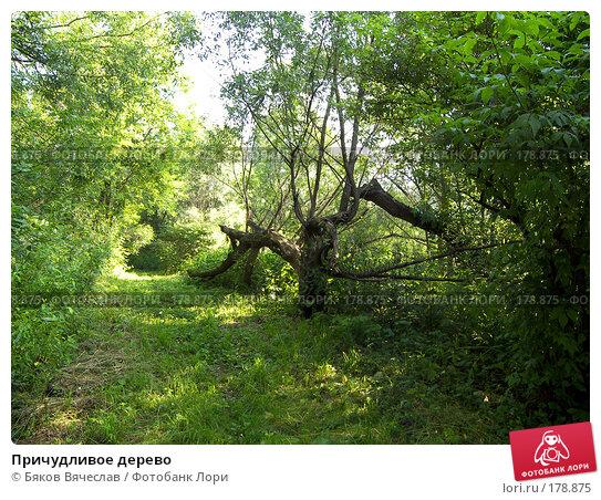 Причудливое дерево, фото № 178875, снято 14 июля 2007 г. (c) Бяков Вячеслав / Фотобанк Лори