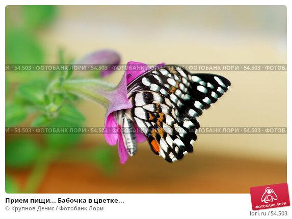 Прием пищи... Бабочка в цветке..., фото № 54503, снято 15 мая 2007 г. (c) Крупнов Денис / Фотобанк Лори