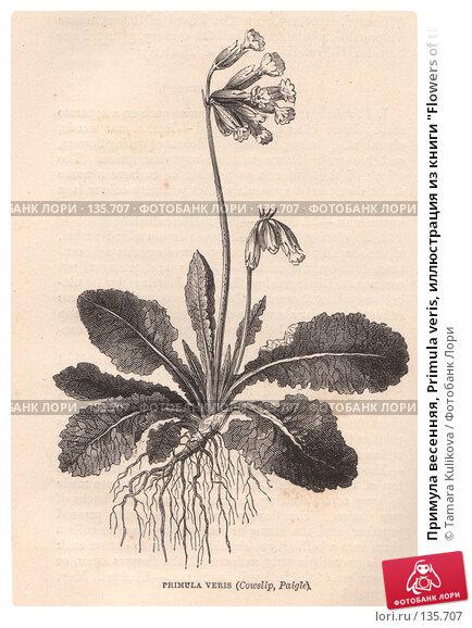 """Примула весенняя, Primula veris, иллюстрация из книги """"Flowers of the field"""", издано в Лондоне в 1888, иллюстрация № 135707 (c) Tamara Kulikova / Фотобанк Лори"""