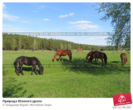 Природа Южного урала, фото № 66255, снято 20 мая 2007 г. (c) Талдыкин Юрий / Фотобанк Лори