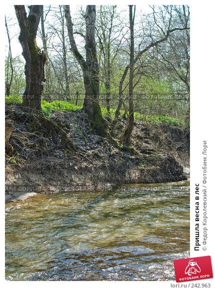 Купить «Пришла весна в лес», фото № 242963, снято 4 апреля 2008 г. (c) Федор Королевский / Фотобанк Лори