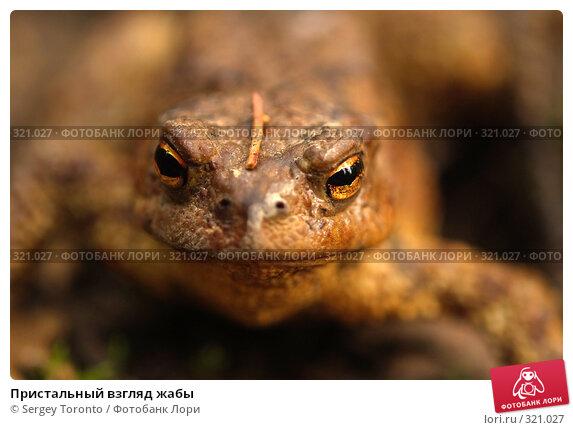Пристальный взгляд жабы, фото № 321027, снято 2 мая 2008 г. (c) Sergey Toronto / Фотобанк Лори