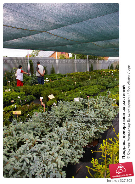 Продажа декоративных растений, фото № 327303, снято 13 июня 2008 г. (c) Окунев Александр Владимирович / Фотобанк Лори