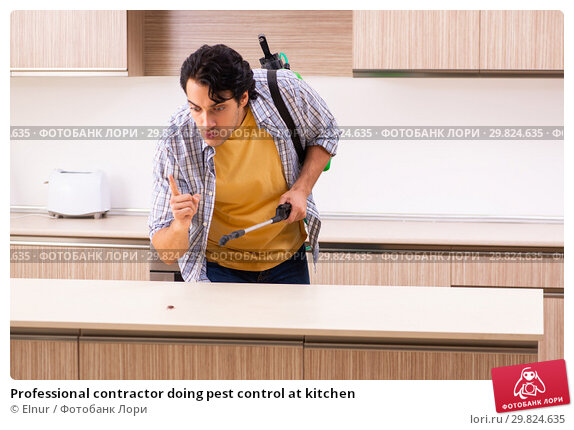Купить «Professional contractor doing pest control at kitchen», фото № 29824635, снято 29 октября 2018 г. (c) Elnur / Фотобанк Лори