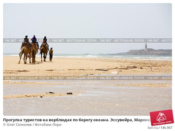 Прогулка туристов на верблюдах по берегу океана. Эссувейра, Марокко., фото № 146967, снято 1 августа 2007 г. (c) Олег Селезнев / Фотобанк Лори