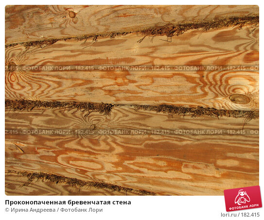 Купить «Проконопаченная бревенчатая стена», фото № 182415, снято 20 января 2008 г. (c) Ирина Андреева / Фотобанк Лори