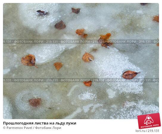 Прошлогодняя листва на льду лужи, фото № 219131, снято 3 декабря 2016 г. (c) Parmenov Pavel / Фотобанк Лори