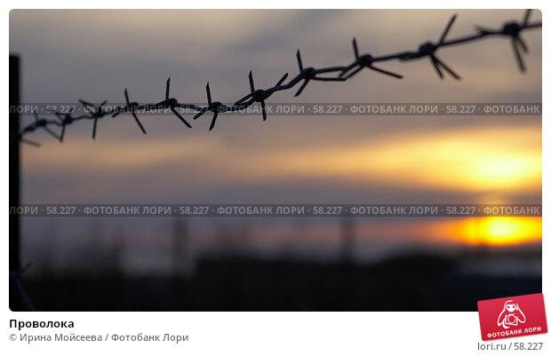 Проволока, эксклюзивное фото № 58227, снято 21 ноября 2006 г. (c) Ирина Мойсеева / Фотобанк Лори