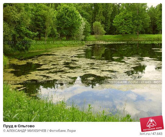Пруд в Ольгово, фото № 47643, снято 17 июня 2006 г. (c) АЛЕКСАНДР МИХЕИЧЕВ / Фотобанк Лори