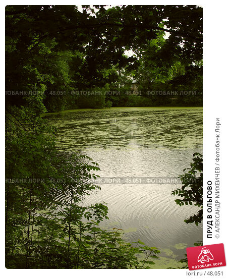 ПРУД В ОЛЬГОВО, фото № 48051, снято 17 июня 2006 г. (c) АЛЕКСАНДР МИХЕИЧЕВ / Фотобанк Лори