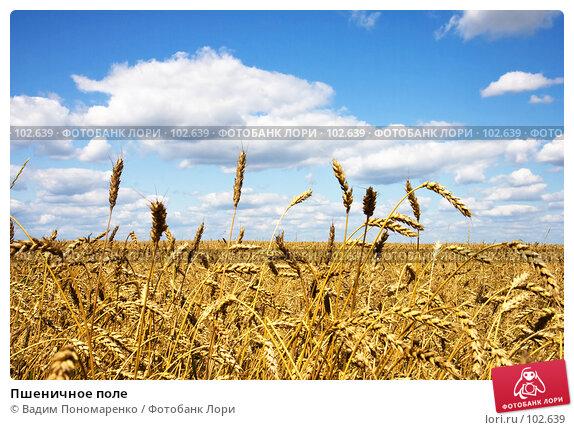 Купить «Пшеничное поле», фото № 102639, снято 23 апреля 2018 г. (c) Вадим Пономаренко / Фотобанк Лори