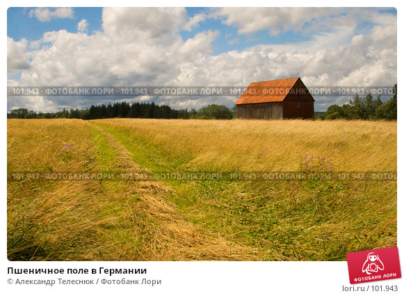 Купить «Пшеничное поле в Германии», фото № 101943, снято 6 июля 2007 г. (c) Александр Телеснюк / Фотобанк Лори