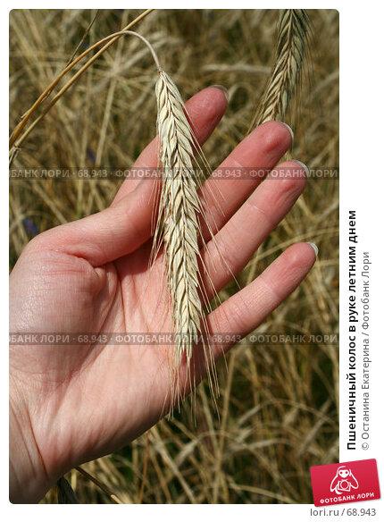 Пшеничный колос в руке летним днем, фото № 68943, снято 29 июля 2007 г. (c) Останина Екатерина / Фотобанк Лори