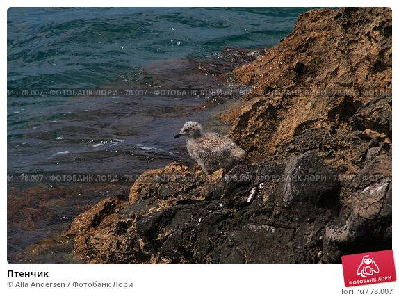 Птенчик, фото № 78007, снято 9 июня 2007 г. (c) Alla Andersen / Фотобанк Лори