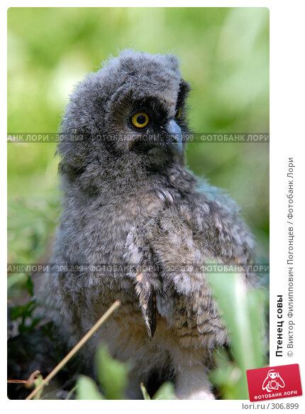 Купить «Птенец совы», фото № 306899, снято 8 июня 2007 г. (c) Виктор Филиппович Погонцев / Фотобанк Лори