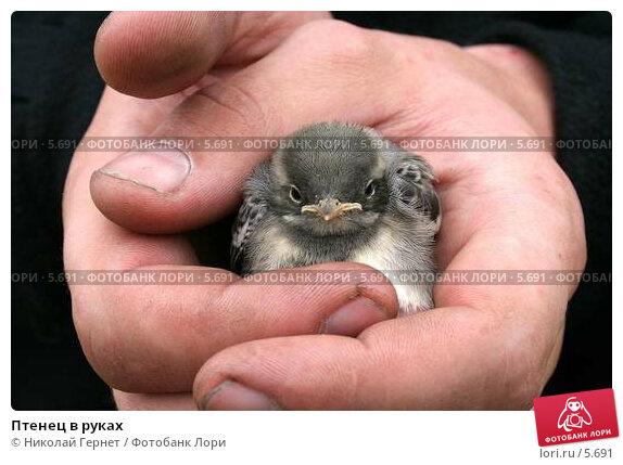 Птенец в руках, фото № 5691, снято 30 июня 2006 г. (c) Николай Гернет / Фотобанк Лори