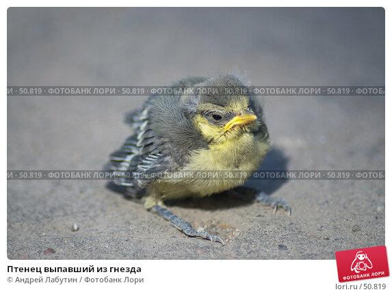 Птенец выпавший из гнезда, фото № 50819, снято 8 июня 2007 г. (c) Андрей Лабутин / Фотобанк Лори