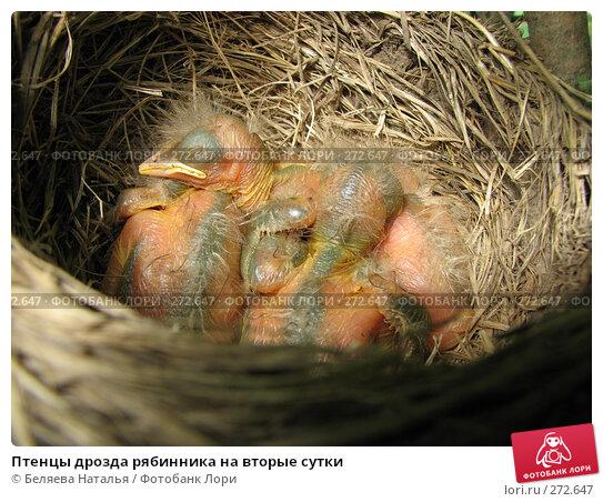 Птенцы дрозда рябинника на вторые сутки, фото № 272647, снято 20 июня 2007 г. (c) Беляева Наталья / Фотобанк Лори