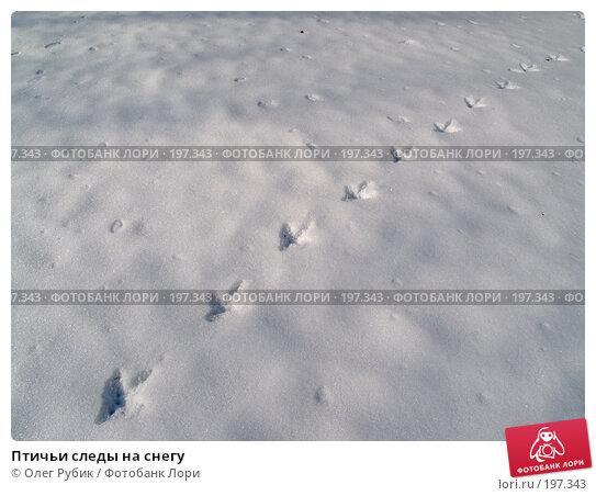 Птичьи следы на снегу, фото № 197343, снято 5 февраля 2008 г. (c) Олег Рубик / Фотобанк Лори