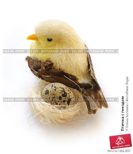 Птичка с гнездом, фото № 262831, снято 26 мая 2017 г. (c) Елена Хоткина / Фотобанк Лори