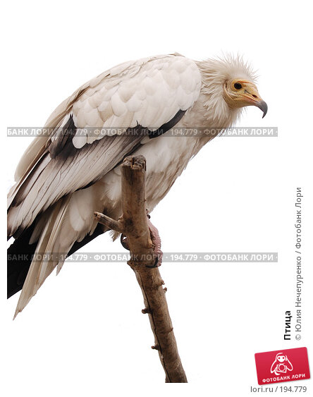 Купить «Птица», фото № 194779, снято 23 ноября 2017 г. (c) Юлия Нечепуренко / Фотобанк Лори