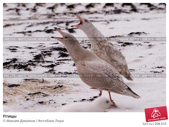 Птицы, фото № 208515, снято 14 октября 2007 г. (c) Максим Деминов / Фотобанк Лори