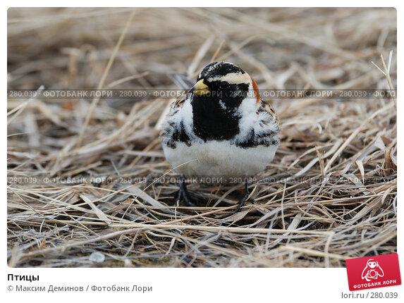 Птицы, фото № 280039, снято 9 мая 2008 г. (c) Максим Деминов / Фотобанк Лори