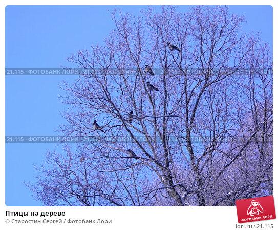 Птицы на дереве, фото № 21115, снято 23 января 2006 г. (c) Старостин Сергей / Фотобанк Лори