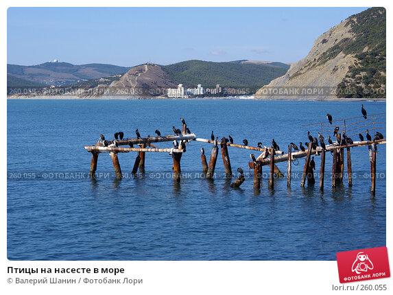 Птицы на насесте в море, фото № 260055, снято 15 сентября 2007 г. (c) Валерий Шанин / Фотобанк Лори
