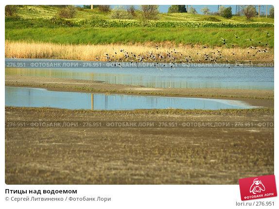 Птицы над водоемом, фото № 276951, снято 7 мая 2008 г. (c) Сергей Литвиненко / Фотобанк Лори
