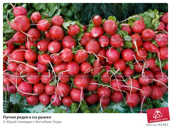 Купить «Пучки редиса на рынке», фото № 63851, снято 18 июля 2007 г. (c) Юрий Синицын / Фотобанк Лори