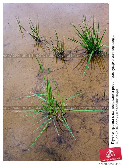 Пучки травы с капельками росы, растущие из-под воды, фото № 251415, снято 11 апреля 2008 г. (c) Борис Панасюк / Фотобанк Лори