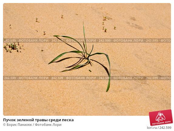 Пучок зеленой травы среди песка, фото № 242599, снято 29 марта 2008 г. (c) Борис Панасюк / Фотобанк Лори