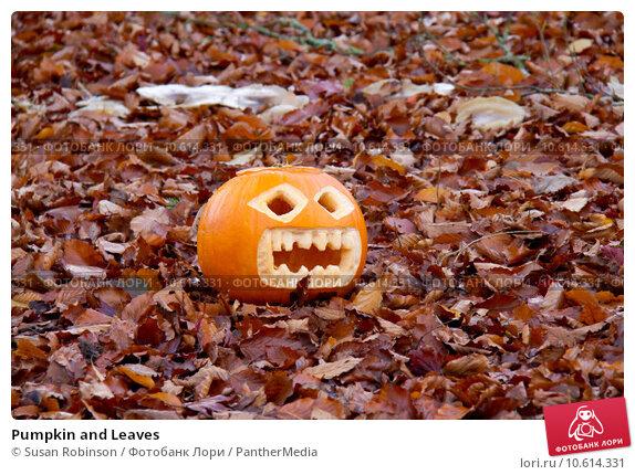 Pumpkin and Leaves. Стоковое фото, фотограф Susan Robinson / PantherMedia / Фотобанк Лори