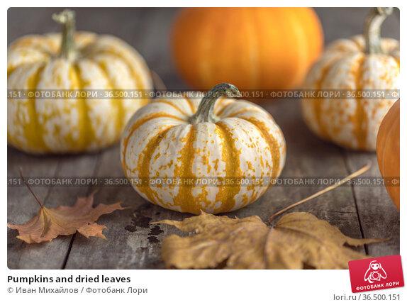 Pumpkins and dried leaves. Стоковое фото, фотограф Иван Михайлов / Фотобанк Лори