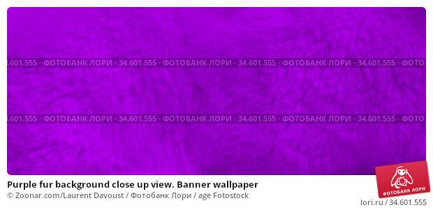 Purple fur background close up view. Banner wallpaper. Стоковое фото, фотограф Zoonar.com/Laurent Davoust / age Fotostock / Фотобанк Лори