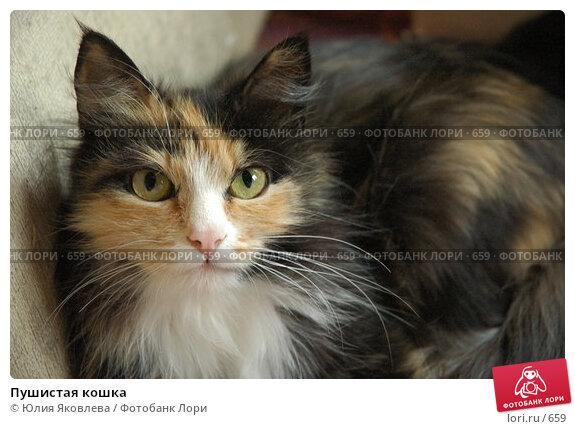Пушистая кошка, фото № 659, снято 2 июня 2005 г. (c) Юлия Яковлева / Фотобанк Лори