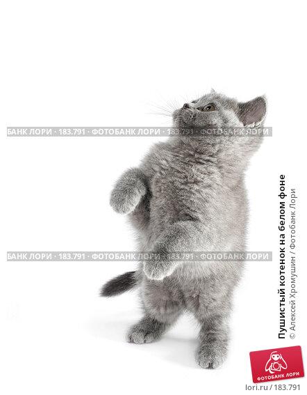 Пушистый котенок на белом фоне, фото № 183791, снято 27 октября 2007 г. (c) Алексей Хромушин / Фотобанк Лори