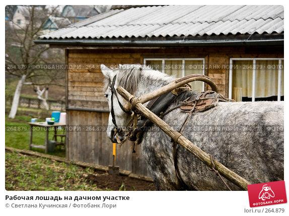Купить «Рабочая лошадь на дачном участке», фото № 264879, снято 13 апреля 2008 г. (c) Светлана Кучинская / Фотобанк Лори